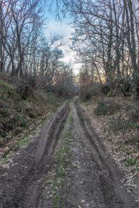 path-1159730